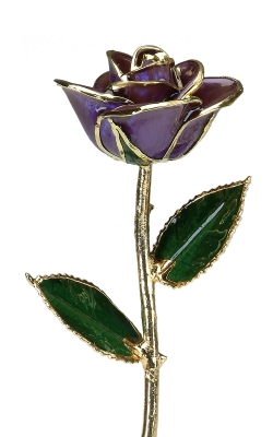 24KT GOLD DIPPED PURPLE ROSE-CGR10-B product image